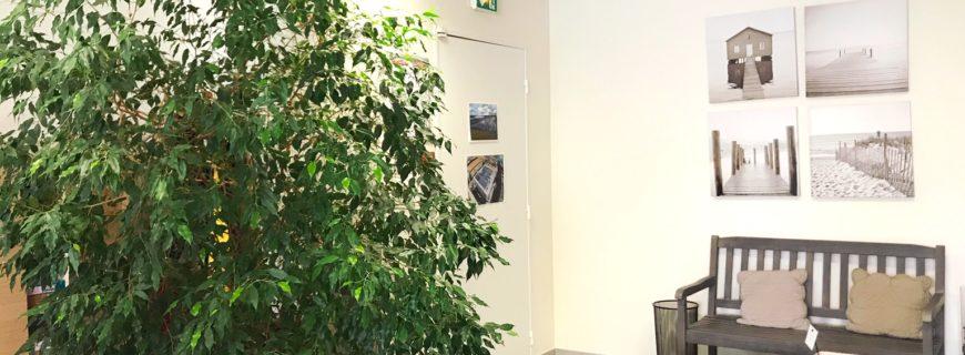 Ces bureaux végétalisés qui respirent l'air frais